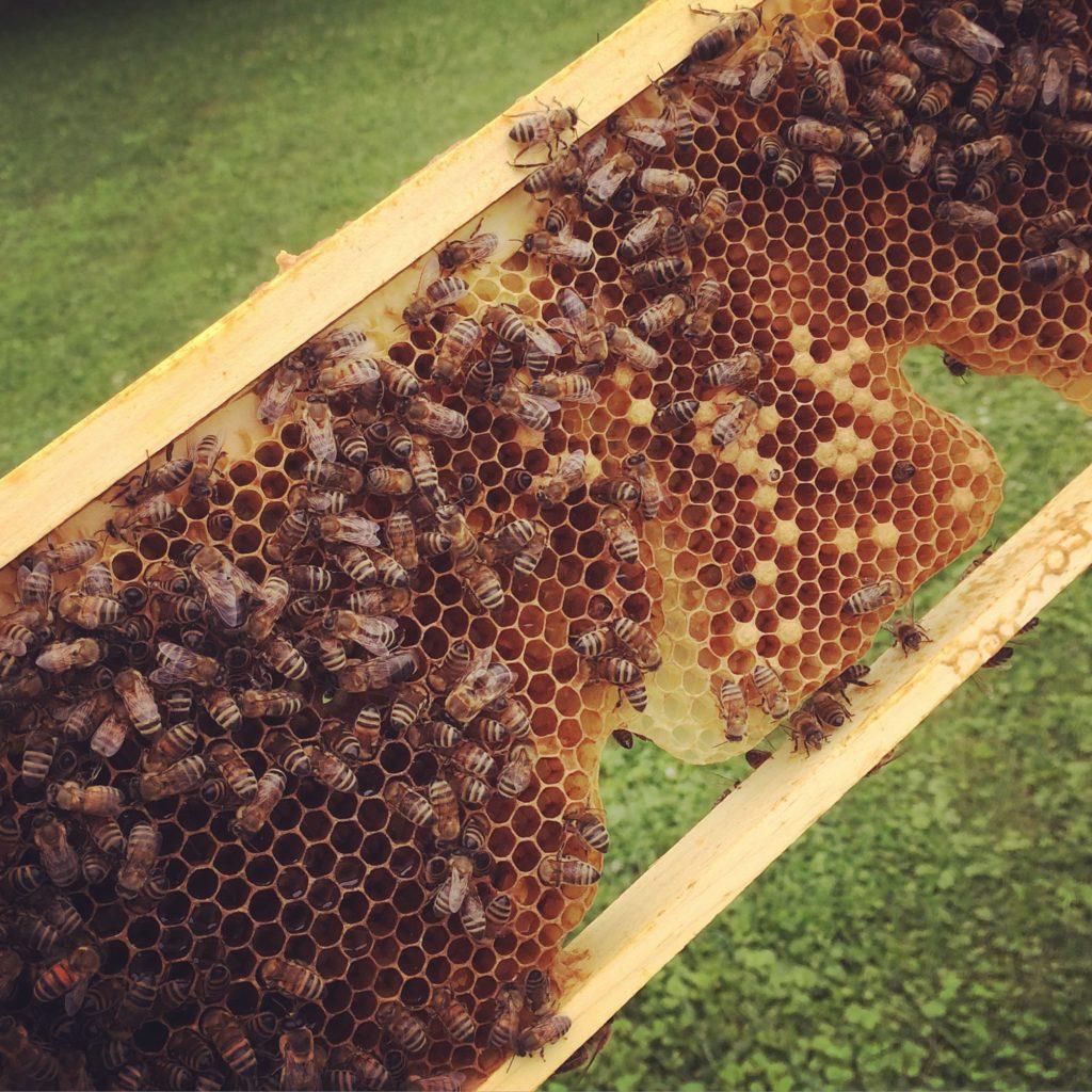 Why We All Need Raw Honey - Harmony Hillside Farm